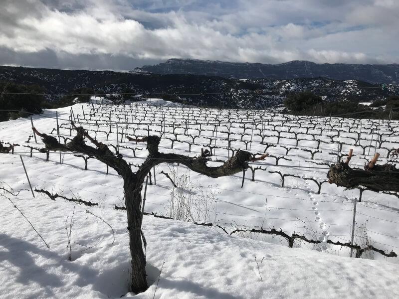 Nevada en las viñas